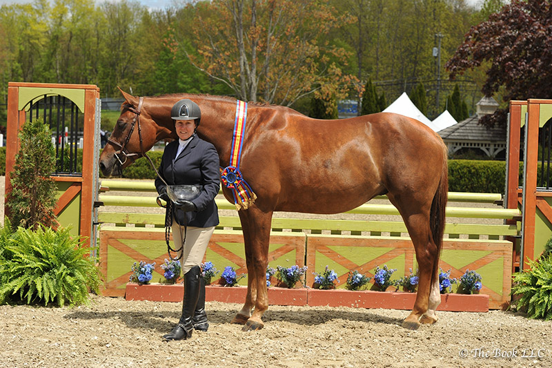 Rock Harbor, ridden by Louise Serio, was named Grand Hunter Champion on Wednesday, May 10, during the 2017 Old Salem Farm Spring Horse Shows at Old Salem Farm in North Salem, NY; photo © The Book